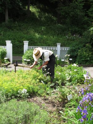Our pharmacist hard at work tending his special pharmacy garden.