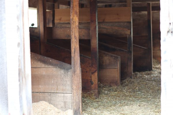 Milking demonstrations happen daily at Sweet Marble Barn in the stalls like these.