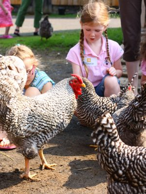Feeding the chickens gets kids up and close to farm animals.