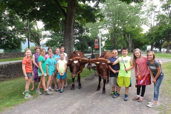 Students experiencing our growing team of yoked oxen as they practice walking together.